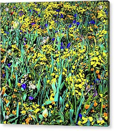 Acrylic Print featuring the photograph Mixed Flower Garden 515 by D Davila