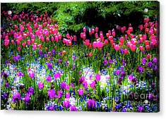 Mixed Flowers With Tulips Acrylic Print by D Davila