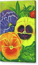 Mixed Pansy Seed Packet Acrylic Print