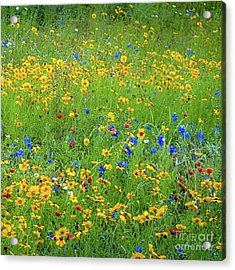 Acrylic Print featuring the photograph Mixed Wildflowers In Bloom 538 by D Davila