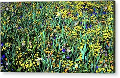 Acrylic Print featuring the photograph Mixed Wildflowers In Texas by D Davila