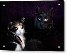 Acrylic Print featuring the photograph Mochi And Stinky by Laura Melis