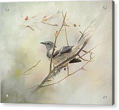 Mockingbird II Acrylic Print