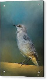 Mockingbird On A Windy Day Acrylic Print by Jai Johnson