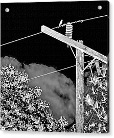Mockingbird On A Wire Acrylic Print