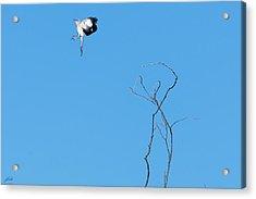 Mockingbird Up Acrylic Print