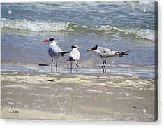 Moe And Larry And Curlie Acrylic Print by Roena King