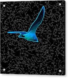 Moewe - Seagull Acrylic Print by Nils Denker