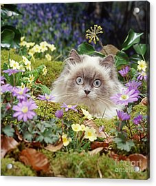 Moggy In The Moss Acrylic Print