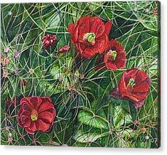 Mohave Mound Cactus Acrylic Print