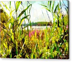 Acrylic Print featuring the painting Mohegan Lake In The Brush by Derek Gedney