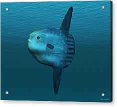 Mola Mola Ocean Sunfish Acrylic Print by Walter Colvin