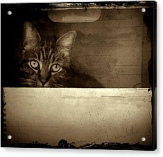 Mollie In A Box Acrylic Print