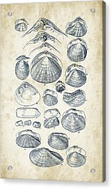Mollusks - 1842 - 04 Acrylic Print