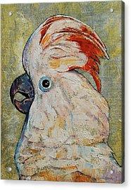 Moluccan Cockatoo Acrylic Print