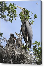 Mom And Babies Acrylic Print