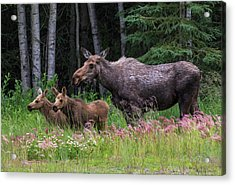 Mom And The Twins Acrylic Print