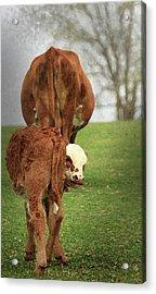 Acrylic Print featuring the digital art Moma Said by Kim Henderson
