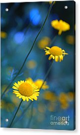 Momentum 04a Acrylic Print by Variance Collections