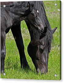 Momma And Baby Acrylic Print