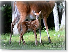 Mommy And Me Acrylic Print by Brenda Bostic