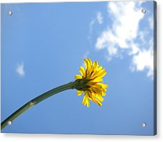 Acrylic Print featuring the photograph Mommy's 1st Flower by Diannah Lynch