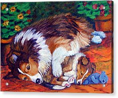 Mom's Love - Shetland Sheepdog Acrylic Print by Lyn Cook