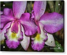 Mom's Orchid 2 Acrylic Print by Deborah Benoit