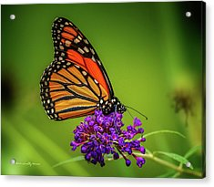 Monarch #1 Acrylic Print