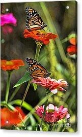 Monarch 8 Acrylic Print