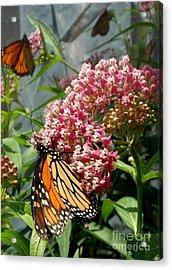 Monarch Arc Acrylic Print