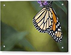 Monarch Art Acrylic Print by Elsa Marie Santoro