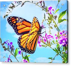 Monarch Butterfly And Blue Skies Acrylic Print by Mark Andrew Thomas