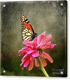 Monarch Butterfly And Pink Zinnia Acrylic Print by Judy Palkimas