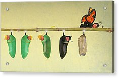 Monarch Butterfly Acrylic Print by Anne Geddes