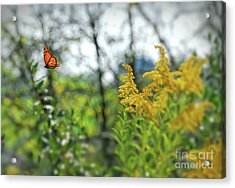Acrylic Print featuring the photograph Monarch Butterfly Flyaway by Kerri Farley
