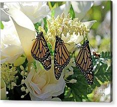 Monarch Butterfly Garden  Acrylic Print