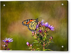 Monarch Butterfly In The Afternoon Sun Acrylic Print by James Steele