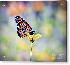 Acrylic Print featuring the photograph Monarch Butterfly -  In The Garden by Kerri Farley