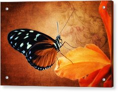 Monarch Butterfly On An Orchid Petal Acrylic Print
