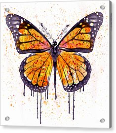 Monarch Butterfly Watercolor Acrylic Print by Marian Voicu