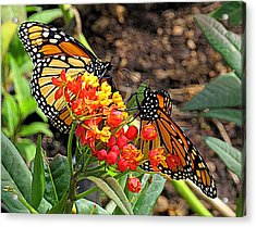 Monarch Handshake Acrylic Print