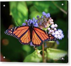 Acrylic Print featuring the photograph Monarch In The Mist by Kerri Farley