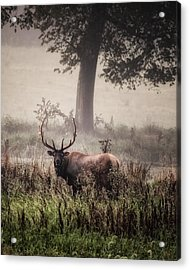 Acrylic Print featuring the photograph Monarch In The Mist by Michael Dougherty