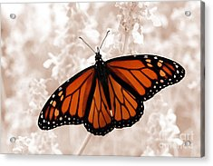 Monarch Acrylic Print by Jeannie Burleson