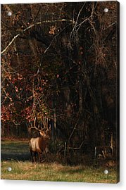 Acrylic Print featuring the photograph Monarch Joins The Rut by Michael Dougherty