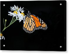 Acrylic Print featuring the photograph Monarch King Of Butterflies by AnnaJanessa PhotoArt