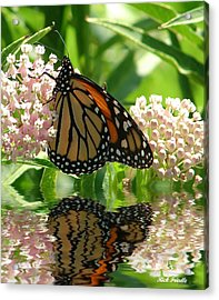 Monarch Lunch Acrylic Print by Rick Friedle