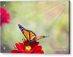 Monarch Magic Acrylic Print