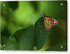 Acrylic Print featuring the photograph Monarch On Leaf by Ann Bridges